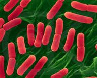 archaebacteria dan eubacteria
