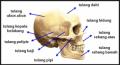 Sistem Rangka Tubuh Manusia