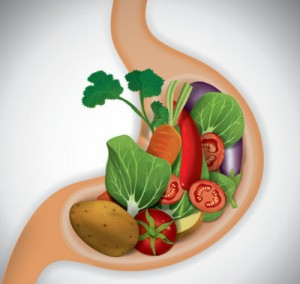 fungsi zat makanan