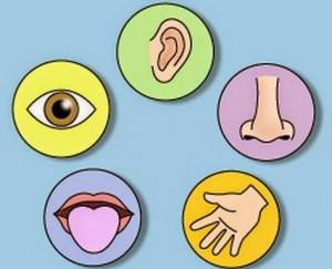 lima alat indera pada manusia