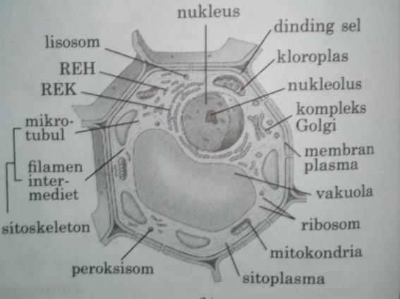 gambar sel tumbuhan