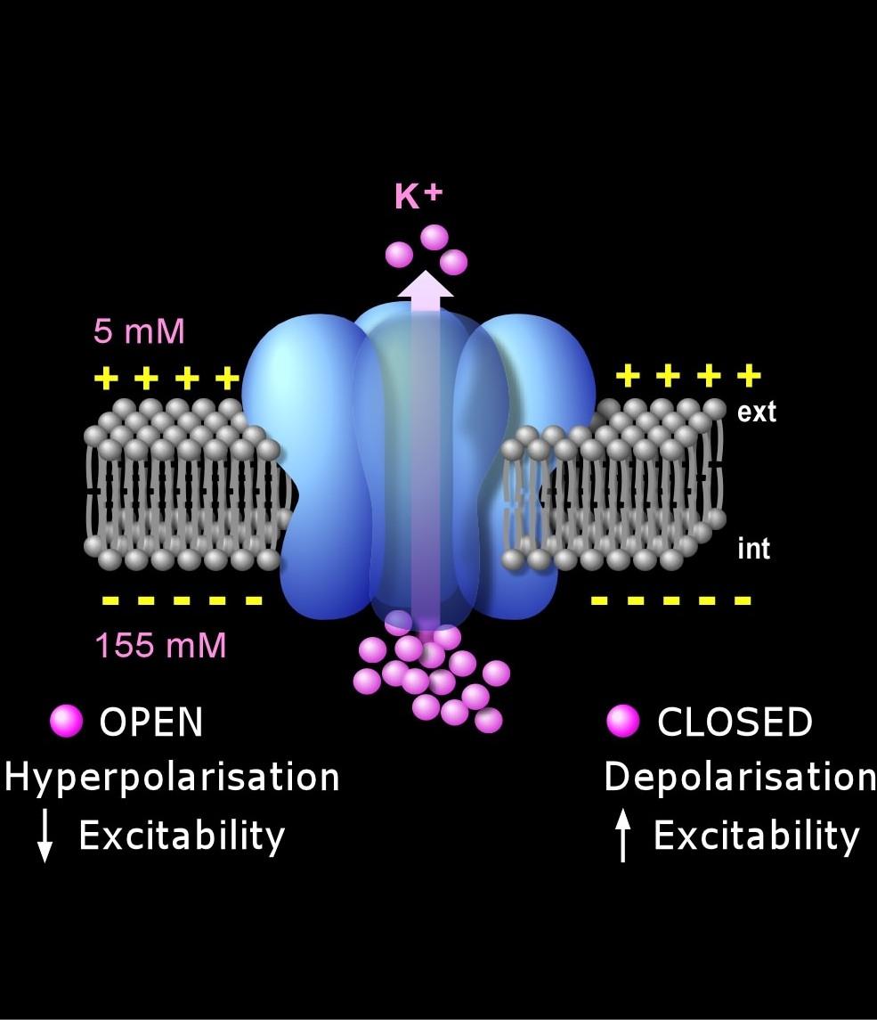 Atom Ion dan Molekul