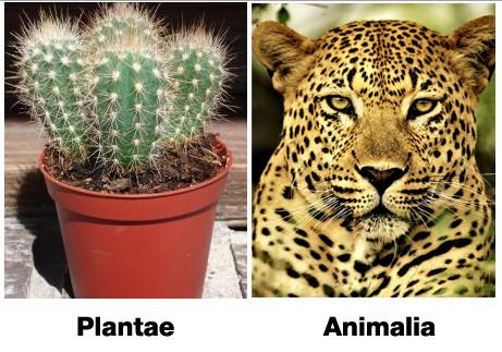 klasifikasi makhluk hidup dua kingdom