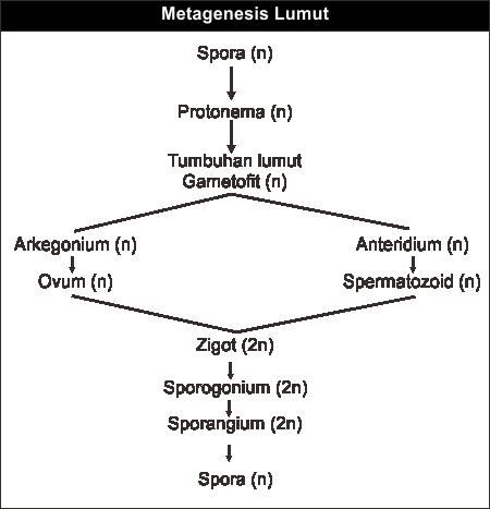 Bagan Metagenesis Lumut Rumushitung Com
