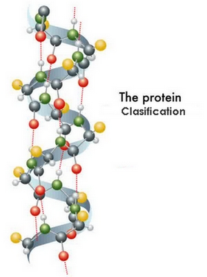 Klasifikasi protein