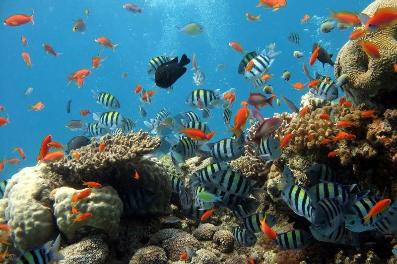 keanekaragaman hayati tingkat ekosistem
