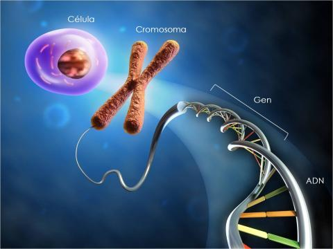 keanekaragaman hayati tingkat sel