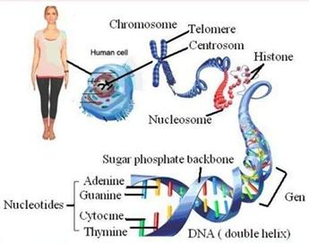 Substansi genetika yang megatur metabolisme tubuh